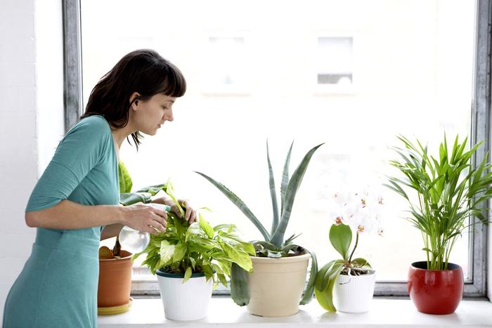 Растения очень чувствительны к сухой атмосфере