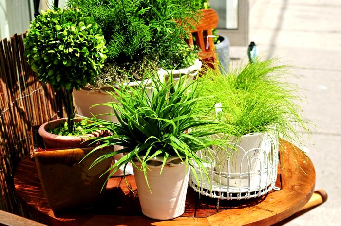 Чем больше зелёной массы растений в комнате, тем выше влажность воздуха