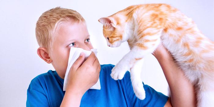 В слишком сухом воздухе много пыли, шерсти домашних животных, пыльцы и других аллергенов