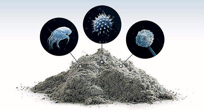 Образование бактерий и клещей в пыли